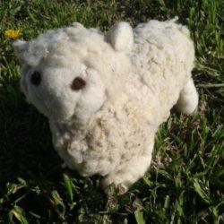 mouton sur gazon